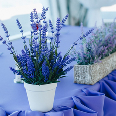 "Выездная регистрация брака ""Лайт"", Viktoriya Wedding Декор"